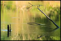 Snags and reflections, Green River. Mammoth Cave National Park ( color)