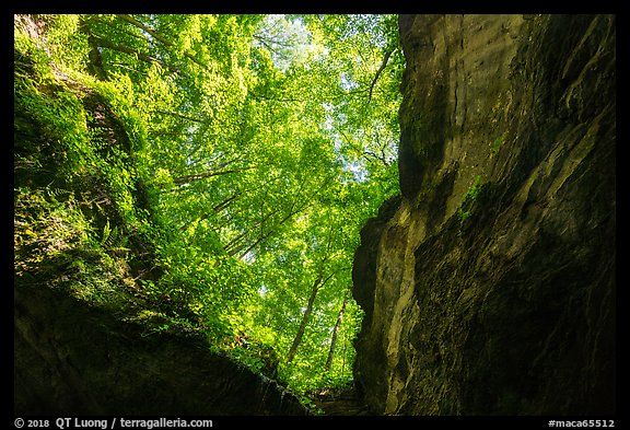 Looking up cave historic entrance. Mammoth Cave National Park (color)