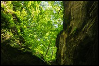 Looking up cave historic entrance. Mammoth Cave National Park ( color)