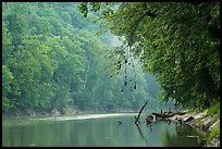 Green River and fog, Dennison Ferry. Mammoth Cave National Park ( color)