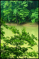 Vegetation and Green River. Mammoth Cave National Park ( color)