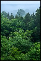 Doyel Valley in fog. Mammoth Cave National Park ( color)