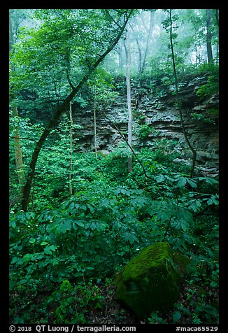 Sinkhole and fog. Mammoth Cave National Park (color)
