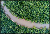 Aerial view of Green River and forest looking down. Mammoth Cave National Park ( color)