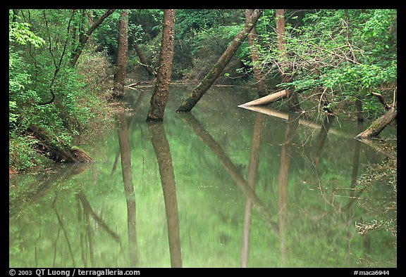 Trees and reflections in Echo River Spring. Mammoth Cave National Park (color)