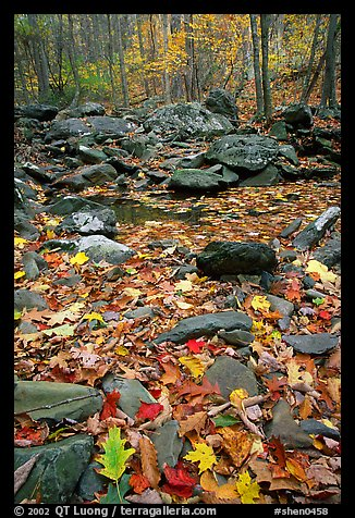 Fallen leaves and rocks in autumn. Shenandoah National Park (color)
