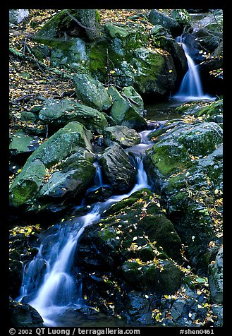 Cascades of the Hogcamp Branch of the Rose River with fallen leaves. Shenandoah National Park (color)