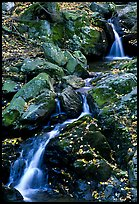 Cascades of the Hogcamp Branch of the Rose River with fallen leaves. Shenandoah National Park, Virginia, USA.