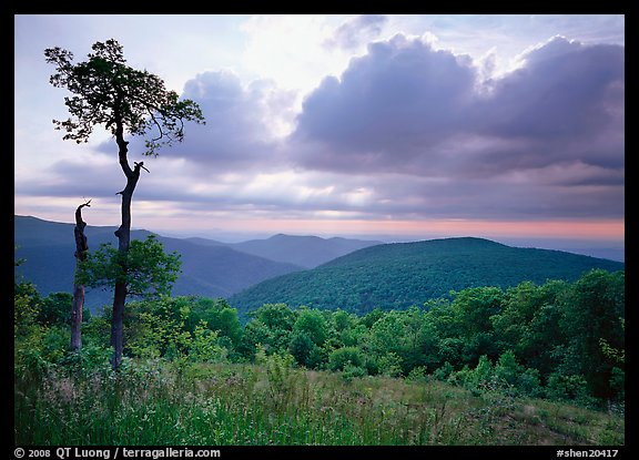 Tree and overlook in the spring. Shenandoah National Park (color)