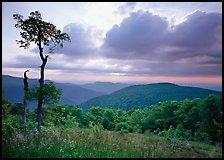 Tree and overlook in the spring. Shenandoah National Park, Virginia, USA.