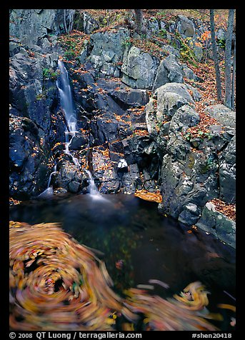 Cascade and circle of fallen leaves in motion. Shenandoah National Park (color)