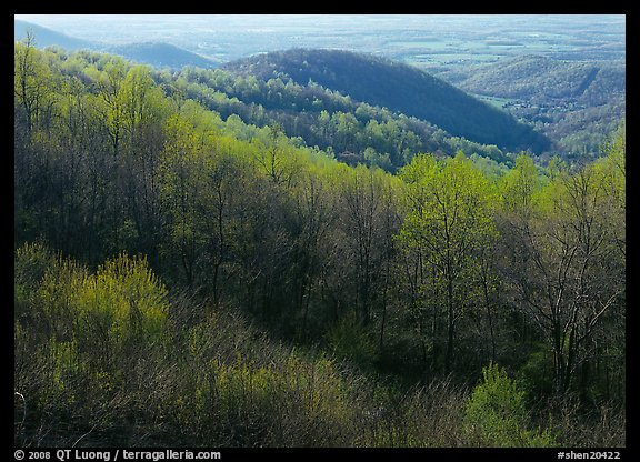 Trees and hills in the spring, late afternoon, Hensley Hollow. Shenandoah National Park (color)