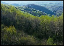 Trees and hills in the spring, late afternoon, Hensley Hollow. Shenandoah National Park ( color)