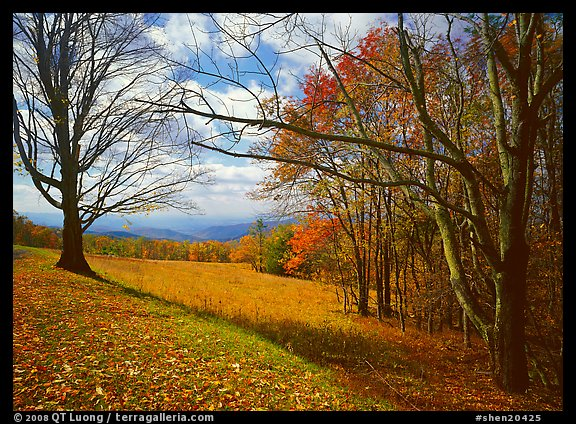Meadow Overlook in fall. Shenandoah National Park (color)