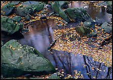 Reflections of trees in a creek with fallen leaves. Shenandoah National Park ( color)