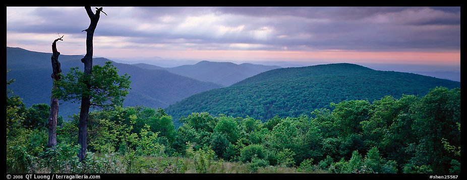 Hillside, forest and ridges in early summer. Shenandoah National Park (color)