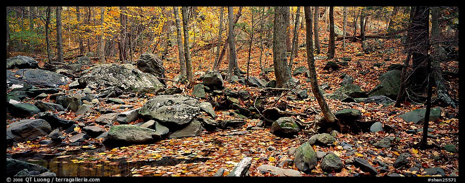 Forest scene with bright autumn leaves on the ground. Shenandoah National Park (color)