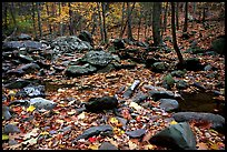 Forest floor, boulders, and trees in fall. Shenandoah National Park, Virginia, USA.