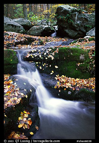 Creek and mossy boulders in fall with fallen leaves. Shenandoah National Park (color)