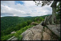 Rocky outcrop, Hazel Mountain Overlook. Shenandoah National Park ( color)