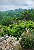 Rocks, blooms, and hills, Hazel Mountain Overlook. Shenandoah National Park ( color)