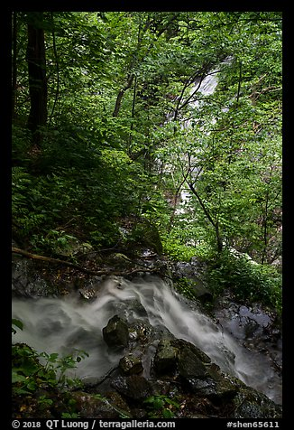Converging Waterfalls in Whiteoak Canyon. Shenandoah National Park (color)