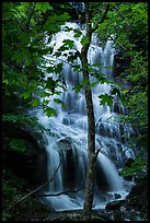 Trees and waterfall, Whiteoak Canyon. Shenandoah National Park ( color)