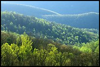 Trees and ridgelines in the spring, late afternoon. Shenandoah National Park, Virginia, USA.