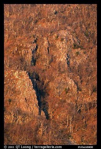 Bare trees and rocky outcrops on hillside near Little Stony Man. Shenandoah National Park, Virginia, USA.