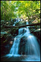 Dark Hollow Falls. Shenandoah National Park, Virginia, USA. (color)