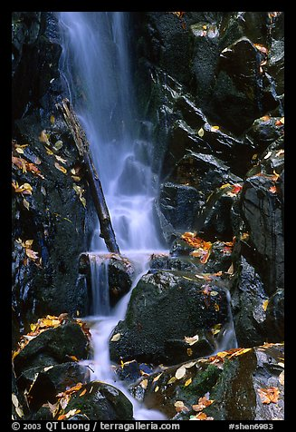 Cascade with fallen leaves. Shenandoah National Park (color)