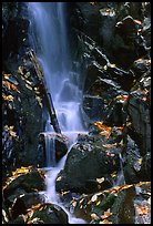 Cascade with fallen leaves. Shenandoah National Park, Virginia, USA.