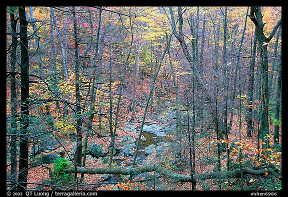 Creek in fall. Shenandoah National Park (color)