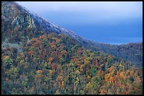 Hillside with fall colors, rocks, and early snow. Shenandoah National Park, Virginia, USA.