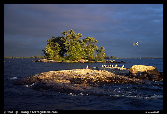 Islands and birds, Kabetogama Lake. Voyageurs National Park (color)