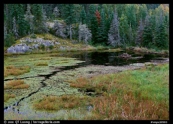Beaver Pond and forest. Voyageurs National Park (color)