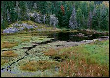 Beaver Pond. Voyageurs National Park ( color)