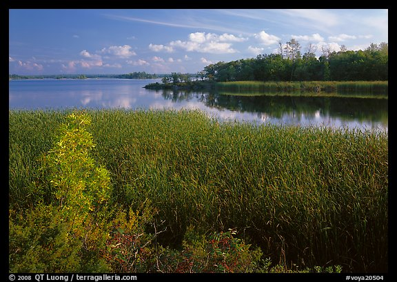 Aquatic grasses and lake, Black Bay. Voyageurs National Park (color)