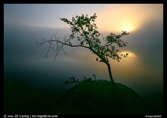 Sun, tree, and fog, Kabetogama Lake. Voyageurs National Park (color)