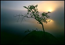 Sun, tree, and fog. Voyageurs National Park ( color)