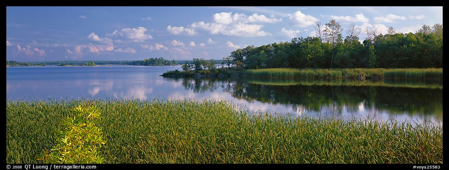 Reeds on lakeshore. Voyageurs National Park (color)