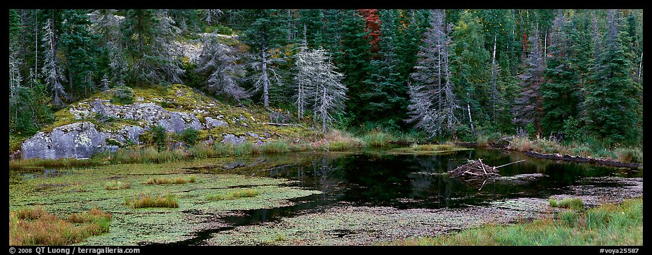 Marsh and north woods forest. Voyageurs National Park (color)