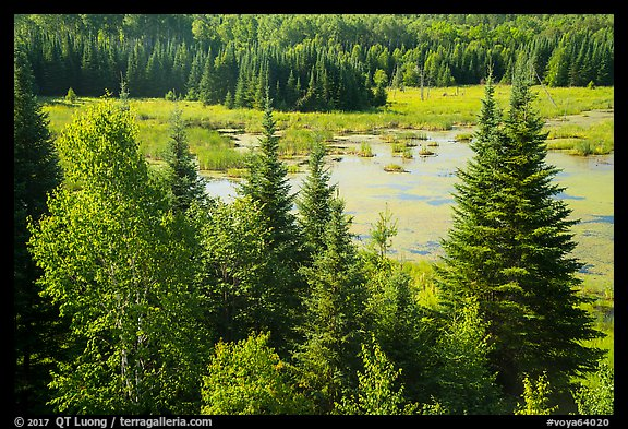 Beaver Pond Overlook, Ash River. Voyageurs National Park (color)