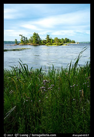 Grasses, wildflowers, and islet, Sand Point Lake. Voyageurs National Park (color)