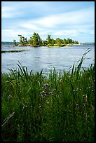 Grasses, wildflowers, and islet, Sand Point Lake. Voyageurs National Park ( color)