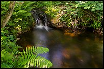 Ferns and stream cascade. Voyageurs National Park ( color)