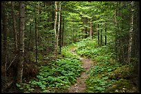 Trail in forest. Voyageurs National Park ( color)