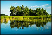 Trees, grasses, and reflections, Northwest Bay, Crane Lake. Voyageurs National Park ( color)