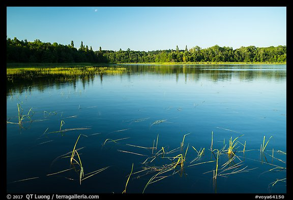 Water grasses and reflections, Northwest Bay, Crane Lake. Voyageurs National Park (color)