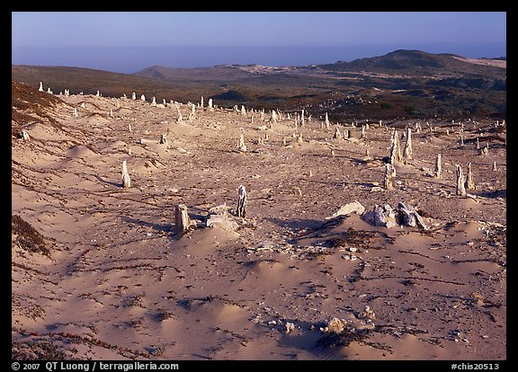 Caliche stumps, early morning, San Miguel Island. Channel Islands National Park (color)